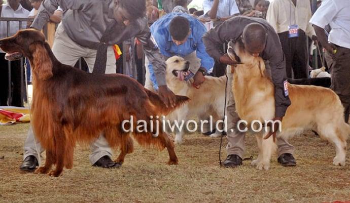 mysore-dog-show-2