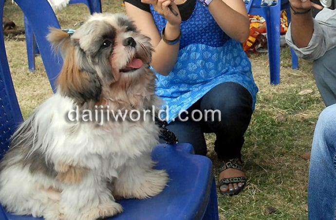 mysore-dog-show-3