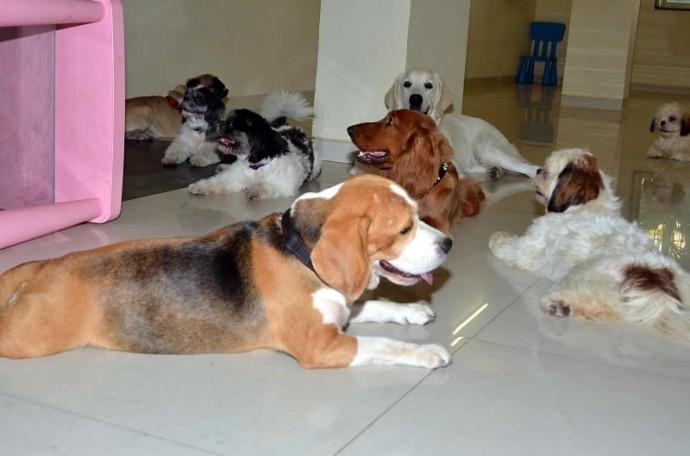 doggie-dog-world-5