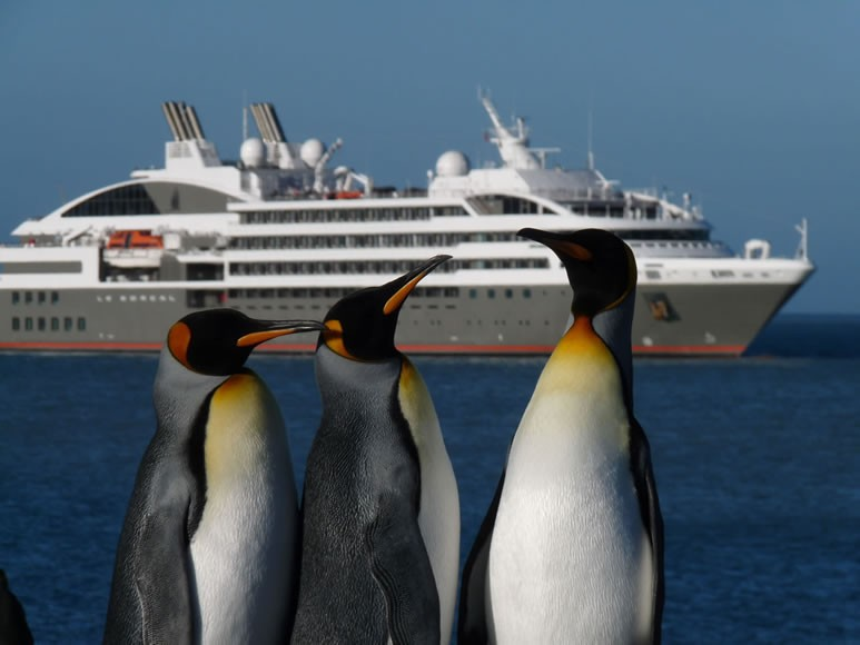 ANTARCTICA- South Georgia Islands; King penguins and Le Boreal cruise ship in the background