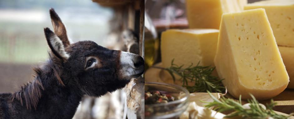 donkey-cheeses