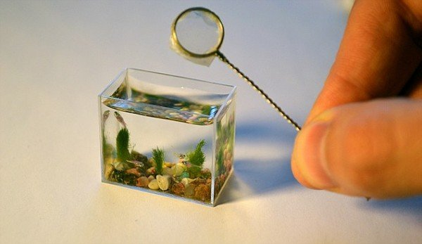 smallest aquarium1
