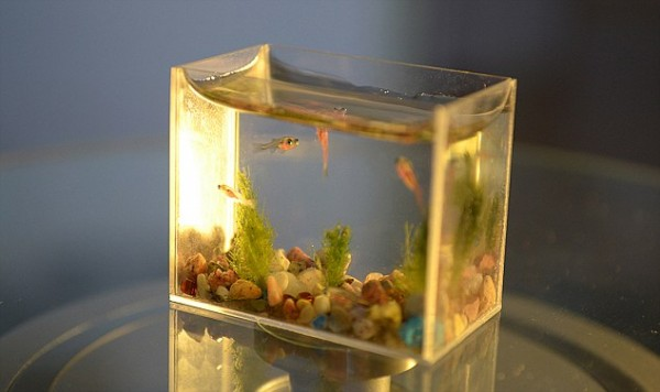 smallest aquarium2