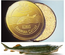 Almas Beluga Is The World S Most Expensive Caviar