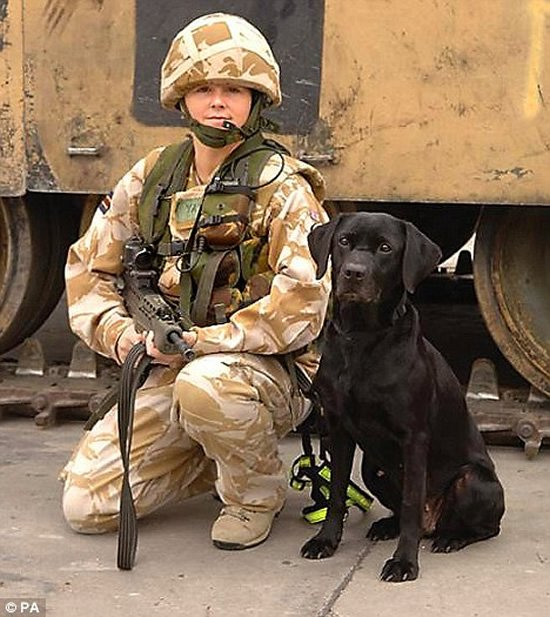 Army-bomb-dogs-1