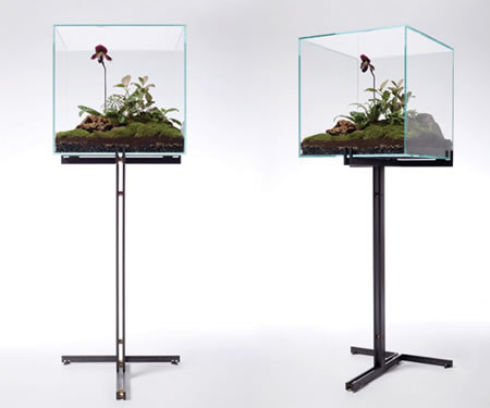 Ladyslipper-terrarium