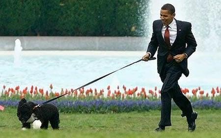 Obamas_dog_Bo