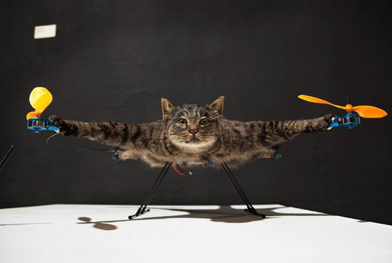 Orvillecopter-cat-helicopter-3-thumb-550x369