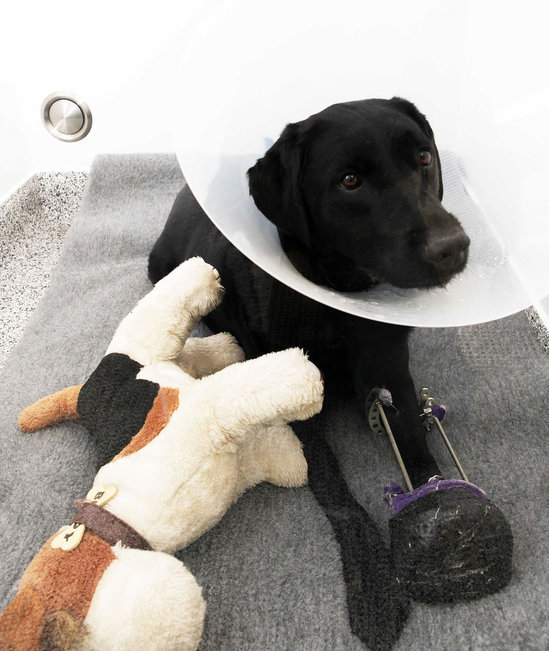 Worlds_first_pet_hospital-thumb-550x651