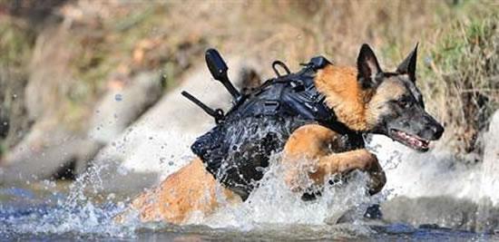 armored-dog-vest-1