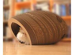 cat-cocoon