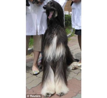dog-clone