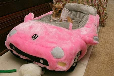 dog-ferrari-bed