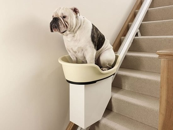 Pet Ramp For Car >> World's first dog stairlift elevates the bar of pampering ...