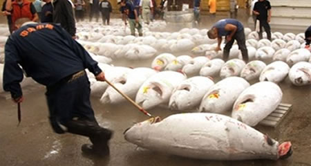 Worlds Most Expensive Tuna Sells For 175000