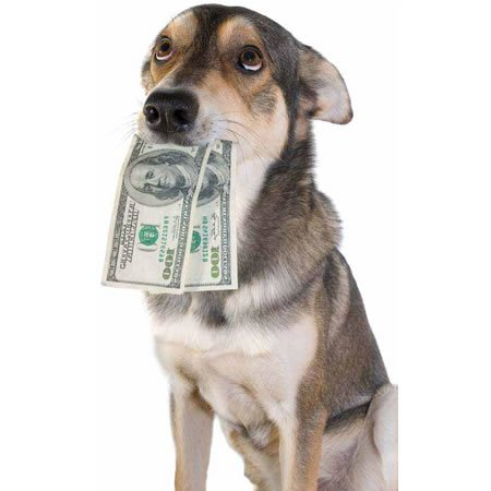 money-dog