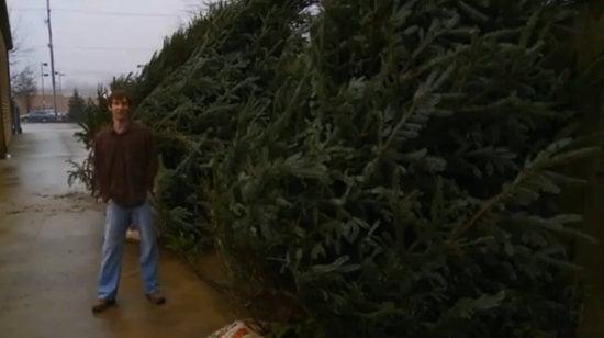 most-expensive-christmas-tree-thumb-550x308