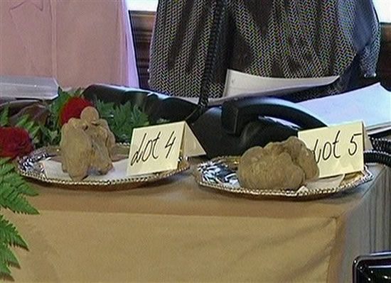 pair-of-white-truffles-1