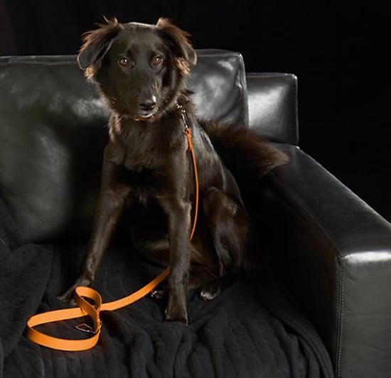 stirrup-dog-collar-2