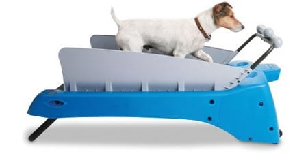 treadmill-for-dogs