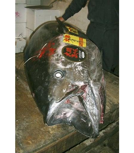 tuna_Tokyo_fish_auction