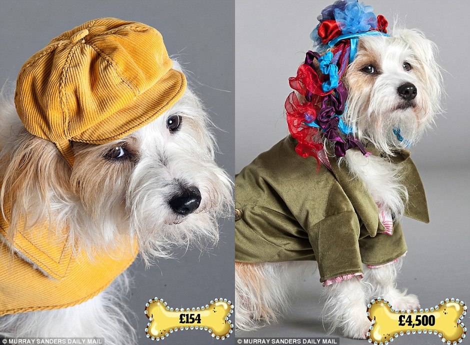 dog-outfits-7