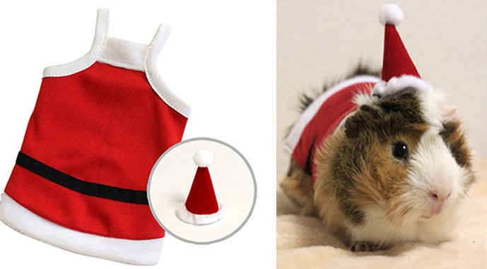 Guinea Pigs Fashion Collection For Furry Pet Rodents