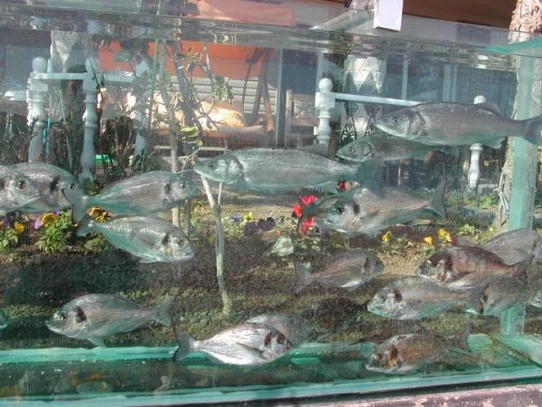 cesme-aquarium-fence-5