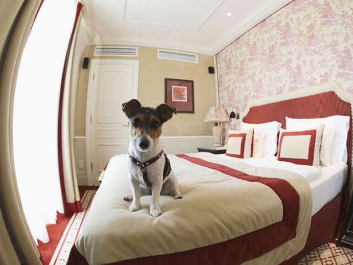 luxury-pet-furniture