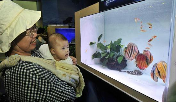 Some Of The Most Expensive Pet Fish Displayed In Taiwan