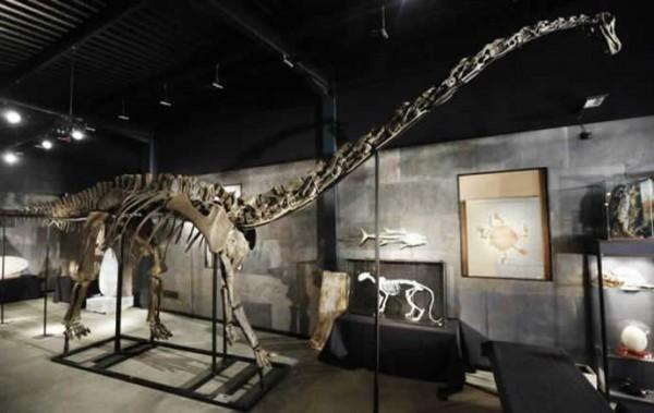 diplodocus-skeleton-1