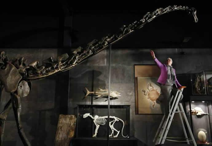diplodocus-skeleton-4