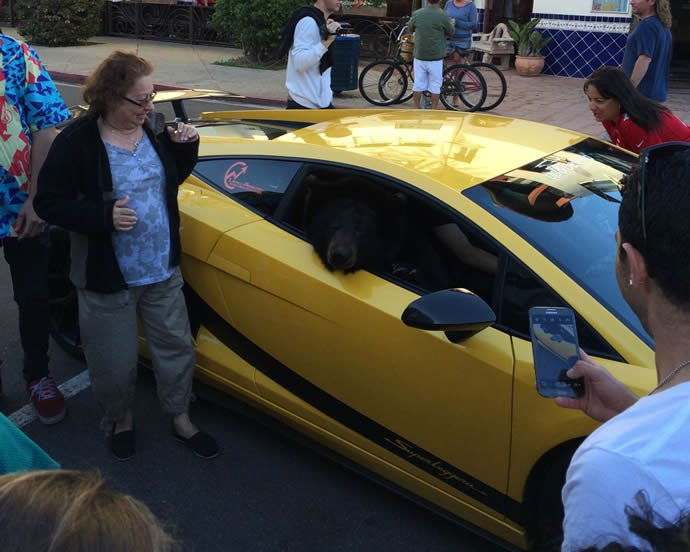 The LAPD adds a swanky Lamborghini Gallardo to its patrol car fleet -