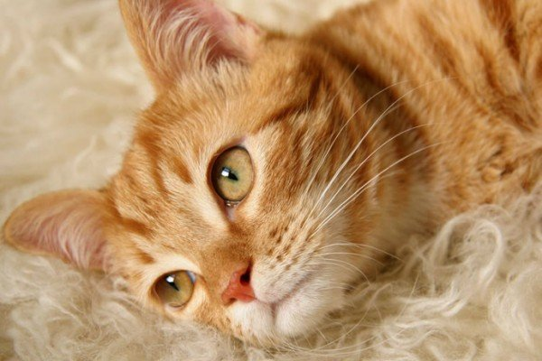 lifestyle-pets-cat-5