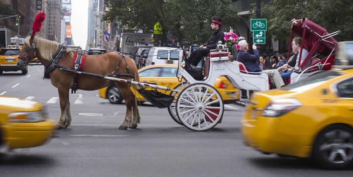 new-york-horse-ride