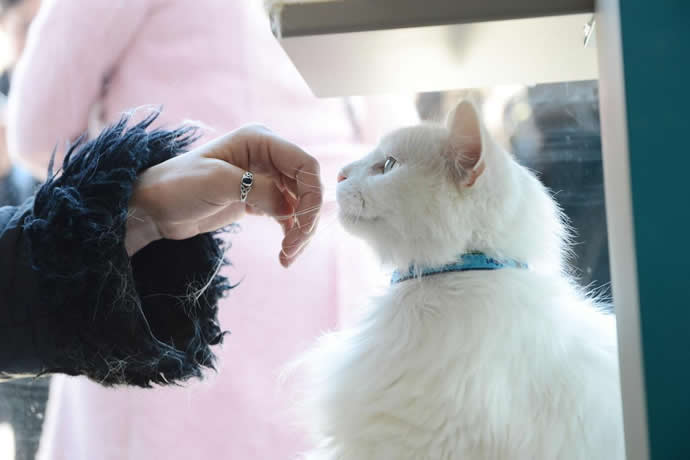 pop-up-cat-cafe-new-york-city-1
