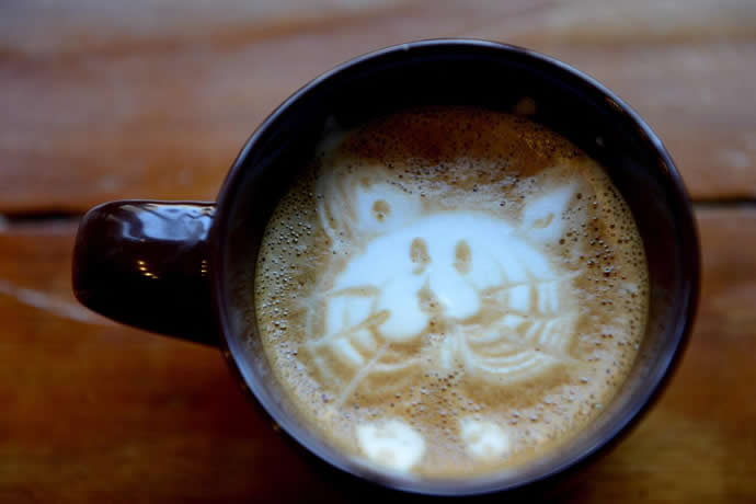 pop-up-cat-cafe-new-york-city-2