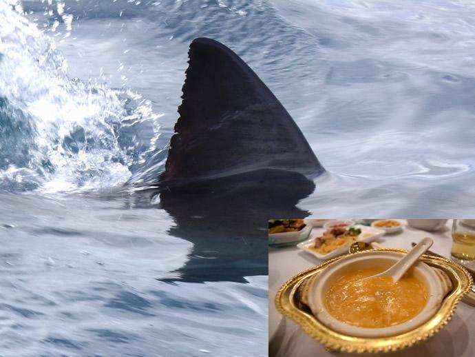 shark-fin-1