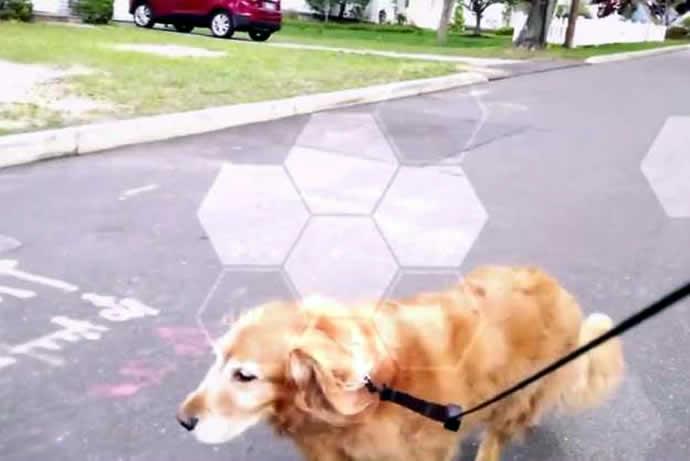 drone-dog-walk-3