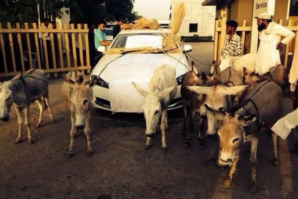 jaguar-india-donkey-1