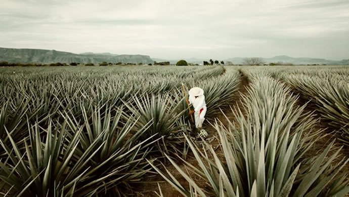 tequila-tour-four-seasons-punta-mita-2