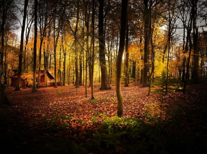 Blackwood Forest