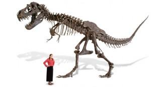 life-size-tyrannosaurus-skeleton