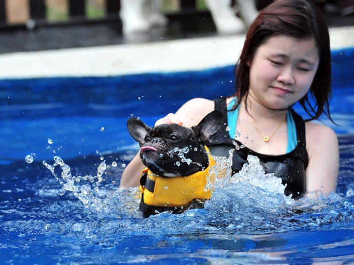 Singapore s wagington hotel gives pets the royal treatment for Can you get lice from a swimming pool