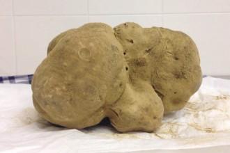 1-million-truffle