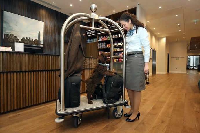 labradoodle-london-hotel-3