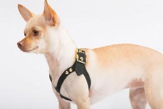brikk-dog-harness-0