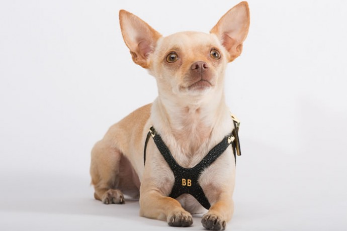 brikk-dog-harness-3