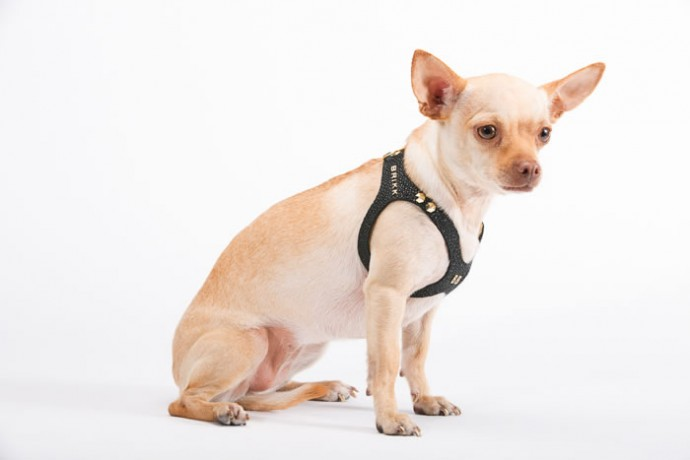 brikk-dog-harness-6