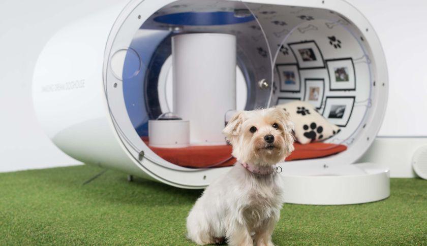 Samsung Made A 31 000 Ultra Futuristic Tech Laden Dog